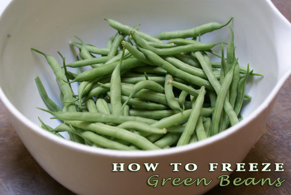 Green bean time! Who has green beans coming out of the garden? If you do not have them in your garden, you can find them at every farmers market right now.