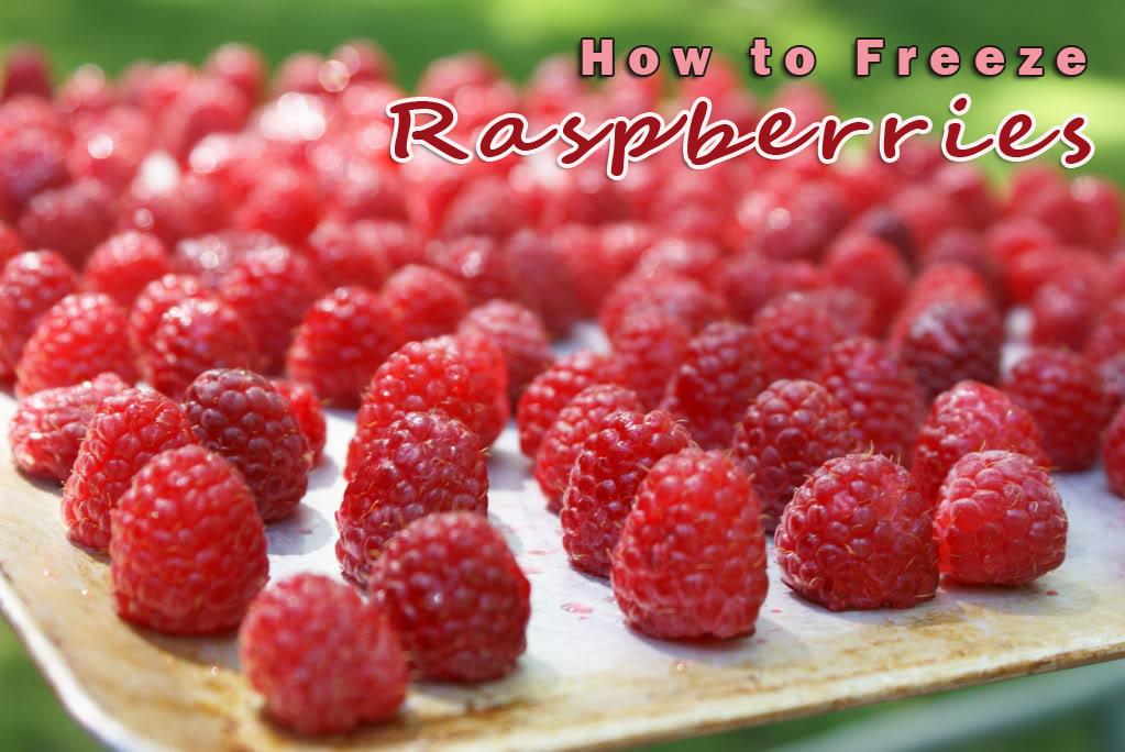 how-to-freeze-raspberries