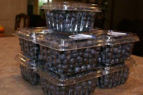 blueberry-sale