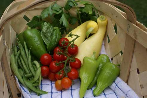garden-harvest-001