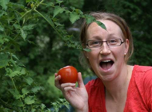 picking-tomato-2