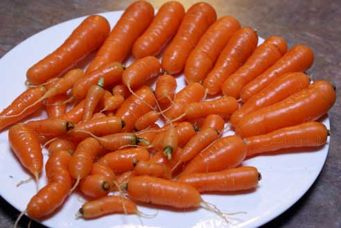 carrots-from-the-garden