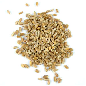 wheat berries Grinding My Own Flour – What Do I Need to Know