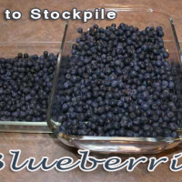 how-to-stockpile-blueberries